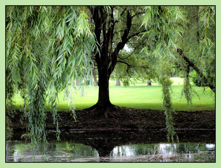Weeping Willow ©zoomonby.com