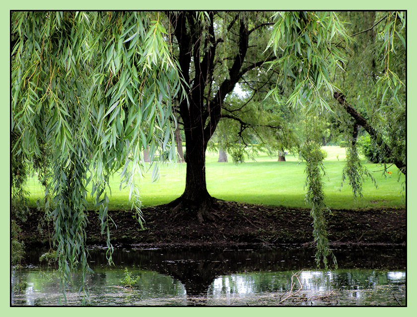 Weeping Willow ©zoomonby.com